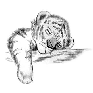 pencil drawn cub