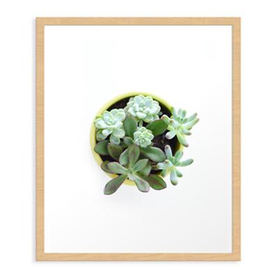 Succulent #2 Art Print