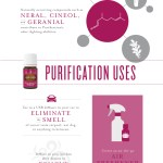 A Guide To Purification Essential Oil Blend Young Living Blog