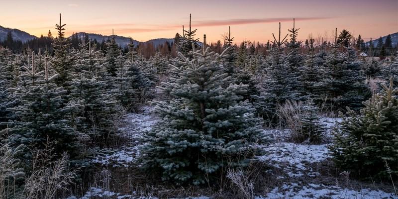 Highland Flats Tree 農場與蒸餾廠 — 美國愛達荷州那普勒斯