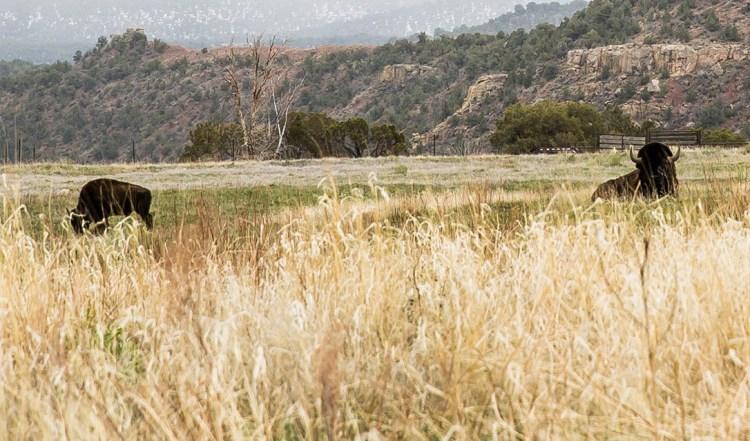 Skyrider Wilderness 農場 — 美國猶他州塔比奧納市