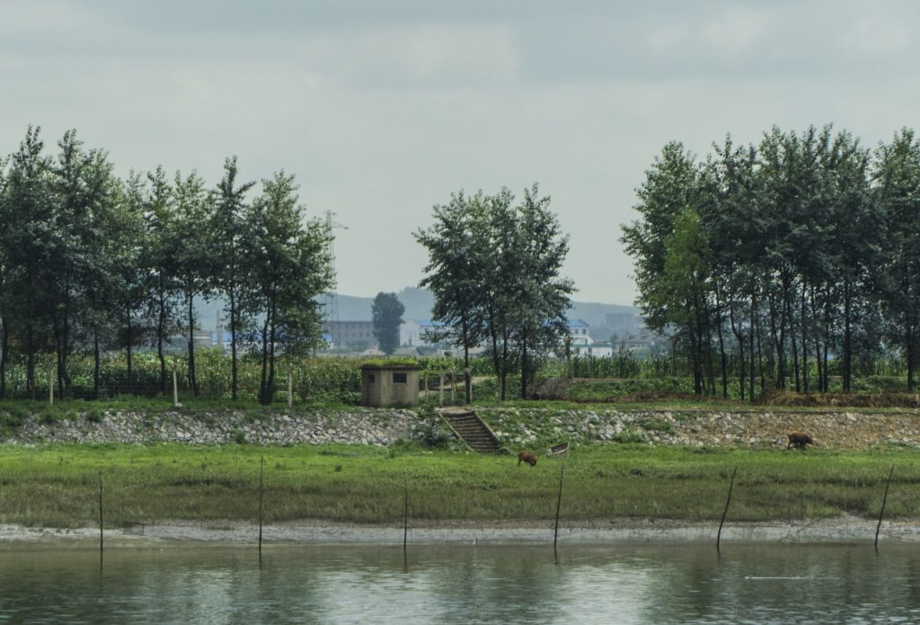 Livestock grazing near a border guard tower on the DPRK side of the Yalu river