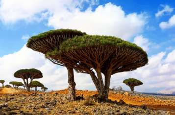 Socotra Arabian Sea October Tour