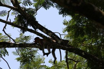 Malaysia_Bako_Nationalpark