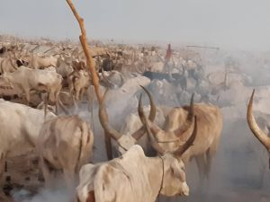 Animals in Juba