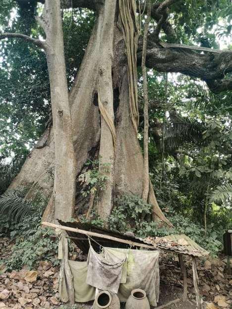 The job fetish tree of Aveve village in Togo.