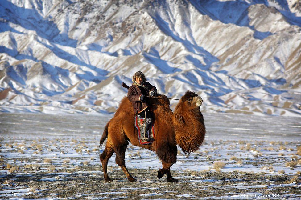 Gobi desert in snow