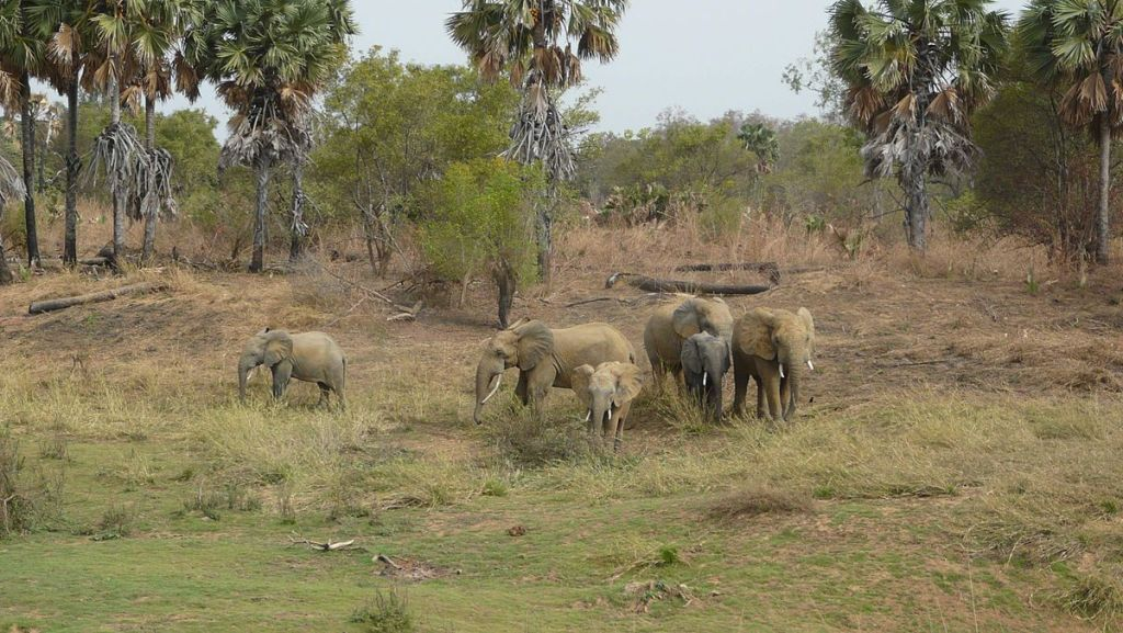 Elephants in Pendjari National Park, Benin, a great location for off the beaten path safaris in Africa