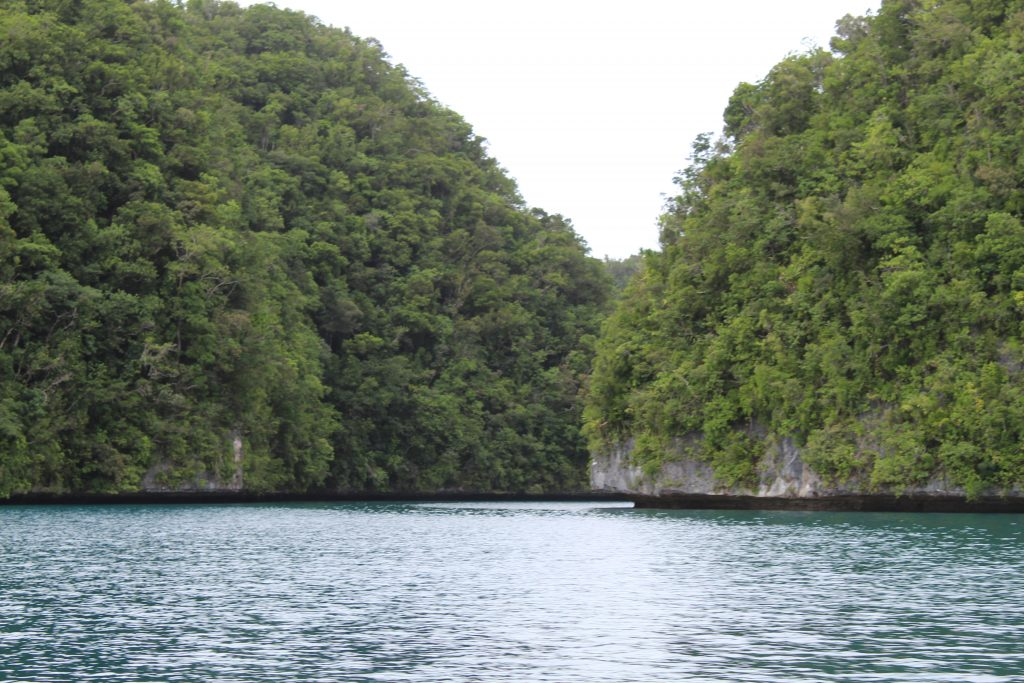 The waters of Palau as seen while travelling in Palau