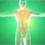 Ganzheitliche Reinigung des Lymphsystems Wichtiger Teil der Entgiftung