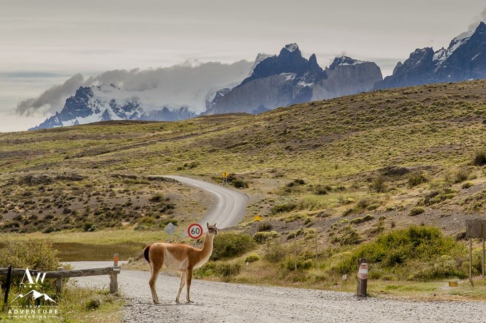 Torres del Paine Patagonia Wedding - Your Adventure Wedding-10