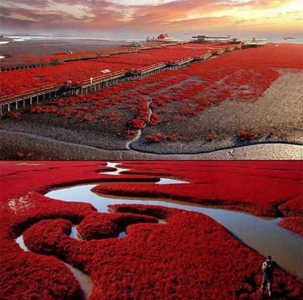 Panjin-Red-Beach-China-