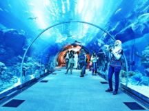 Underwater Zoo And Aquarium In The World's Largest Shopping Mall @ Dubai - YourAmazingPlaces.com