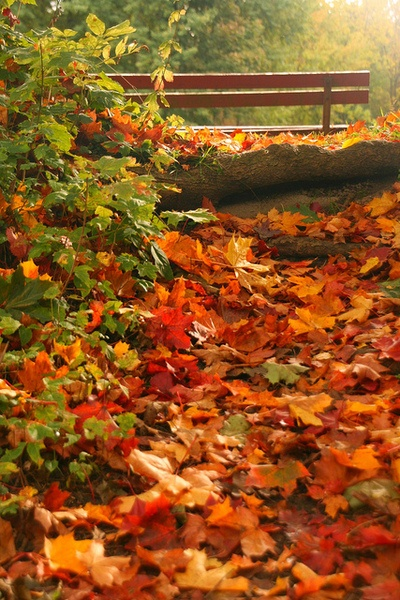 Beautiful Fall Scenes Wallpaper 14 Photos Of Quot I Walked On Paths Of Crisp Autumn Leaves