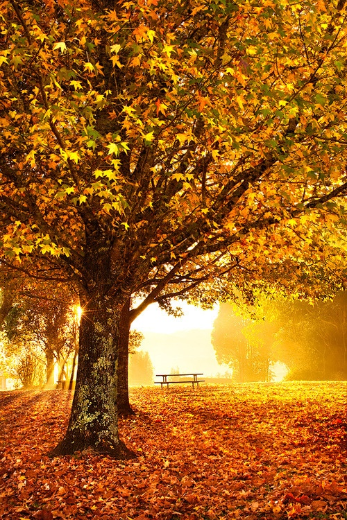 Fall Down Wallpaper 99 Amazing Pictures Of Autumn Idyll Part 1