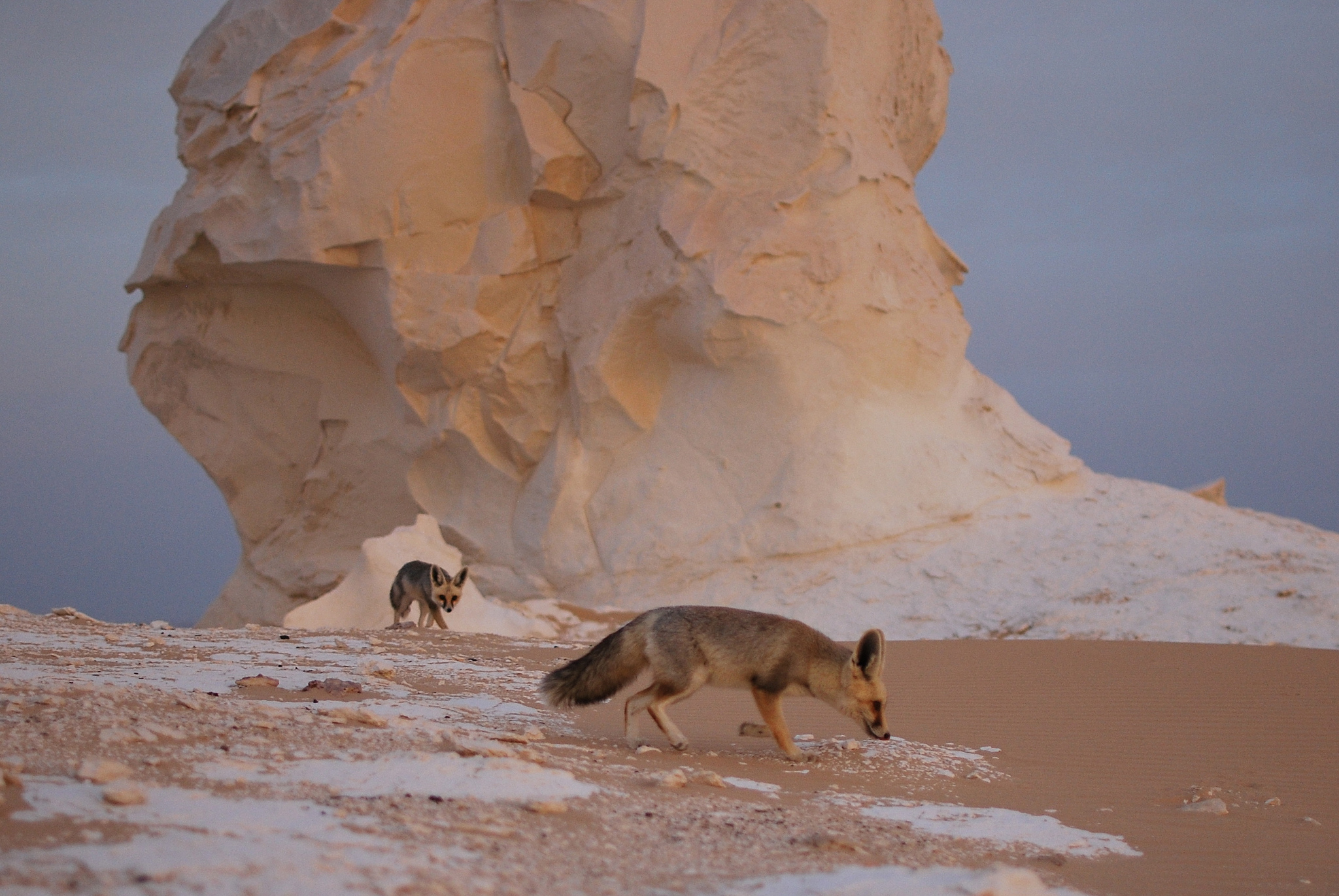 A Stroll through Sahara el Beyda the White Desert in