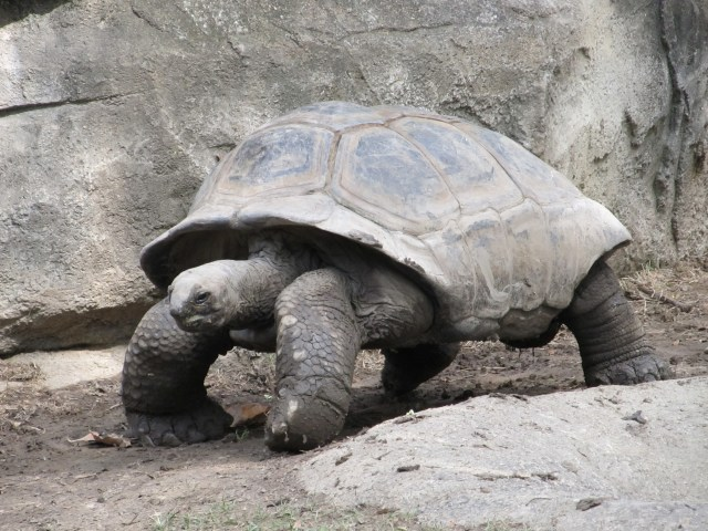 Historical Fiction - tortoise photo