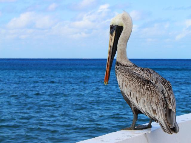 Beach Reads - pelican perched on rail overlooking water