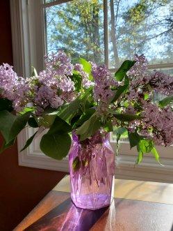 Lilacs in a purple vase
