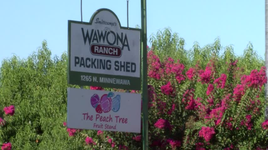Wawona Peach Tree Fruit Stand Robbed