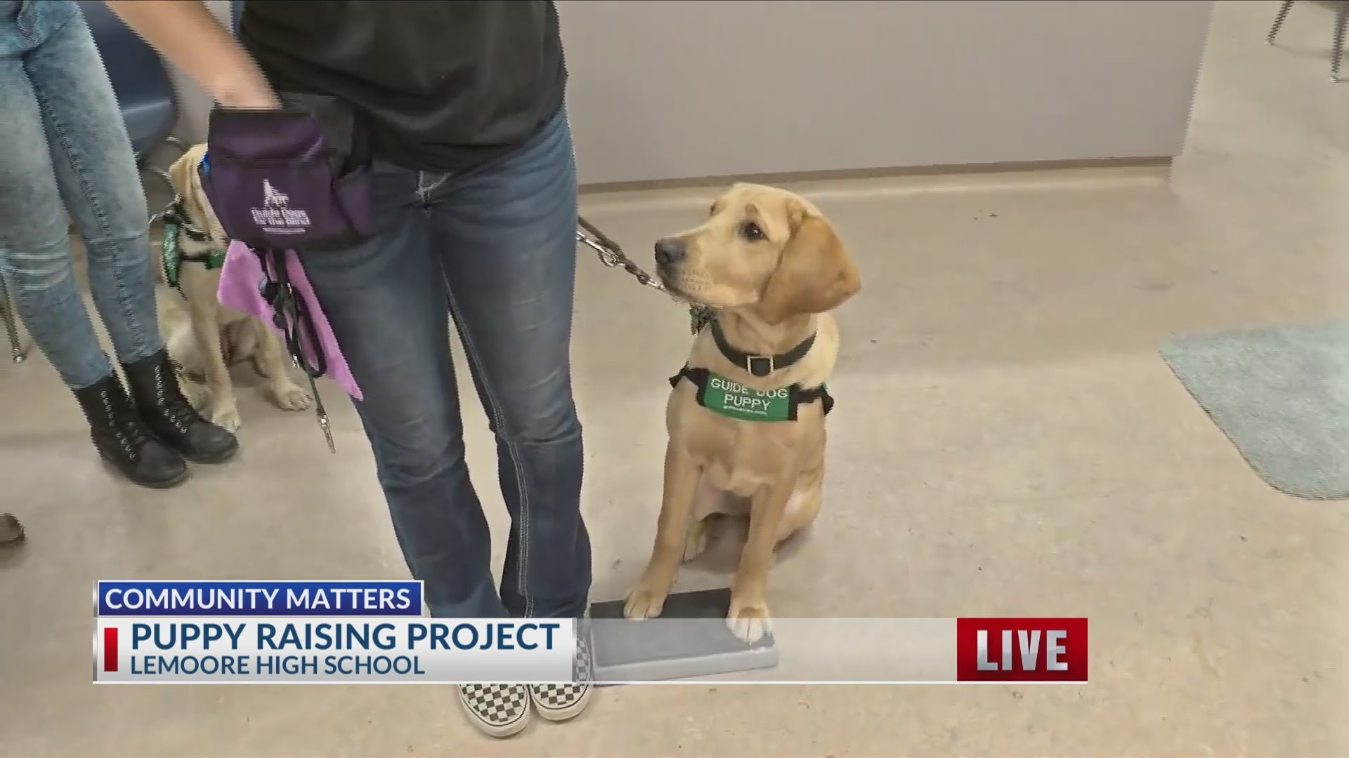 Local_FFA_students_raise_puppies_for_Gui_0_20190116191315