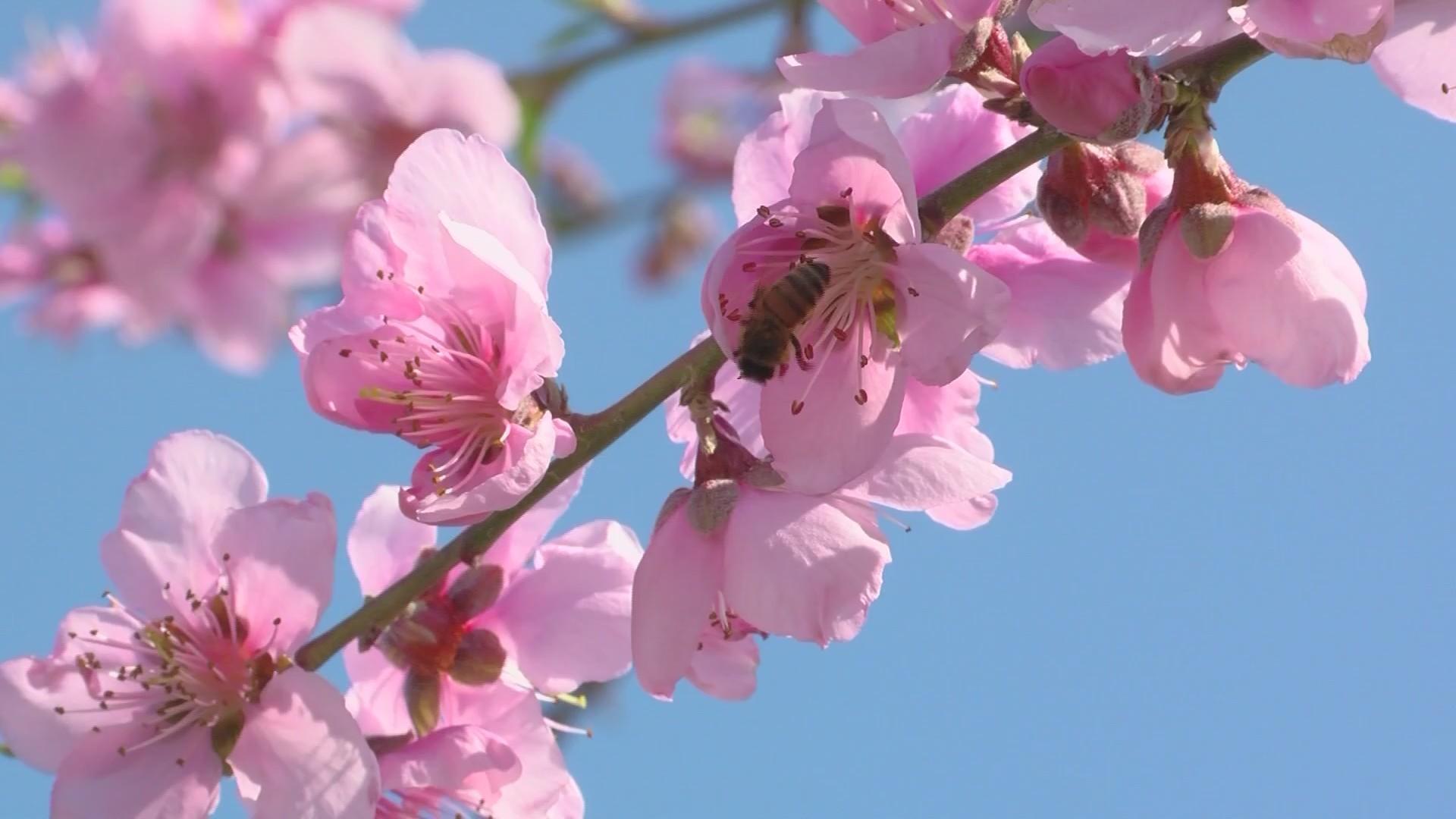 Fresno County Blossom Bus