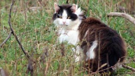 australia cats_1556331543733.jpg_84567301_ver1.0_640_360_1556333482053.jpg.jpg