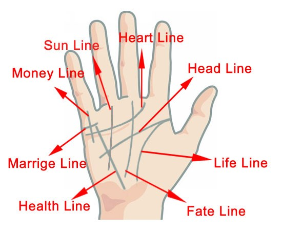 palmistry diagram marriage line 3 circle venn solver palm reading – chinese guide & basics of hand to tell fortune