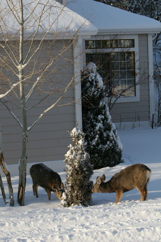 Bears Fox Deer Coyote Mountain LionWildlife oh my  Colorado Springs Real EstateColorado Springs Real Estate