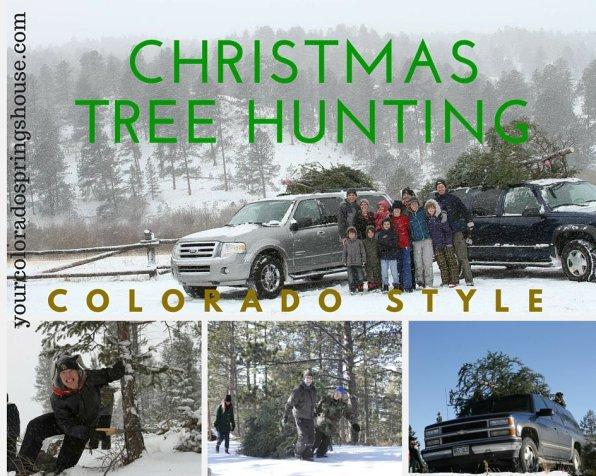 Christmas Tree Hunting in the pikes peak region