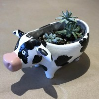 Cow Succulet Planter