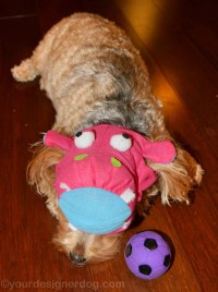 My Hungry, Hungry Hippo - YourDesignerDog