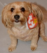 Super Easy DIY Halloween Costume For Your Dog ...