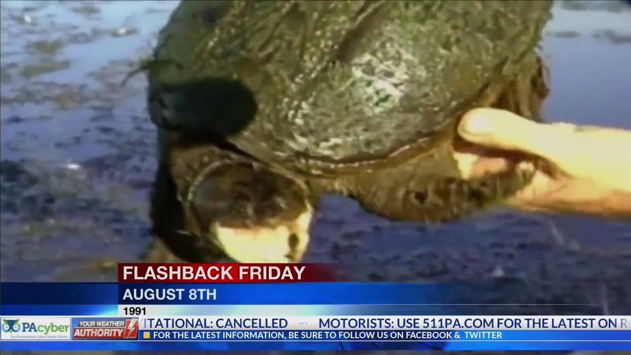 Flashback Friday - The Turtle Hunter