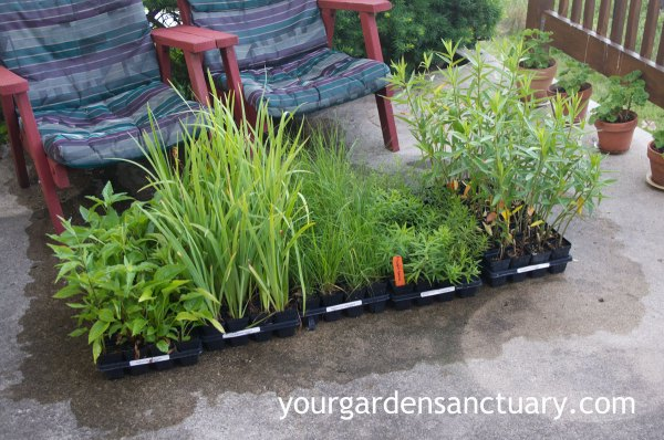 planting plugs cheap and easy