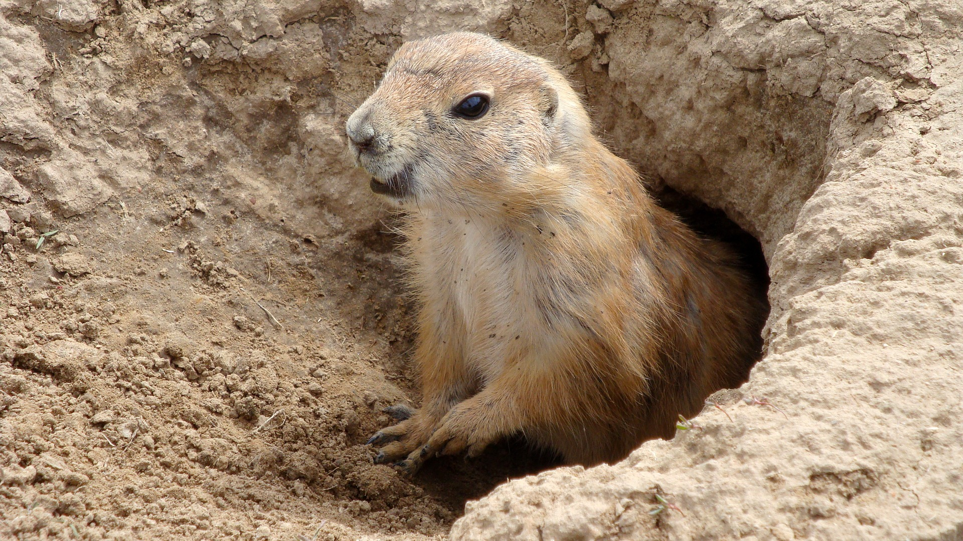 Here's Why Groundhog Day Is Dumb (So Buy Our Stuff)