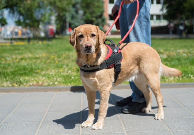 different types of service dogs