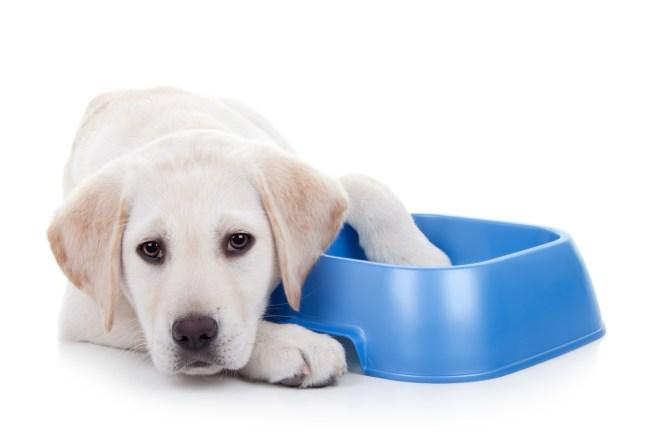 How Much Should I Really Be Feeding My Dog?
