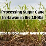 Processing Sugar Cane in Hawaii in the 1860s