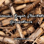 What Occupations Did They Do on Hawaiian Sugar Plantations?