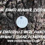 The Bango Number System:  How Employees Were Identified on Hawaii's Sugar Plantations