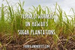 Female Workers on Hawaii's Sugar Plantations
