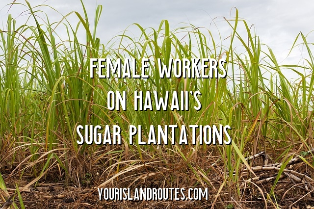 sugar cane women laborers