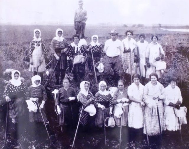 women laborers hawaii sugar plantation