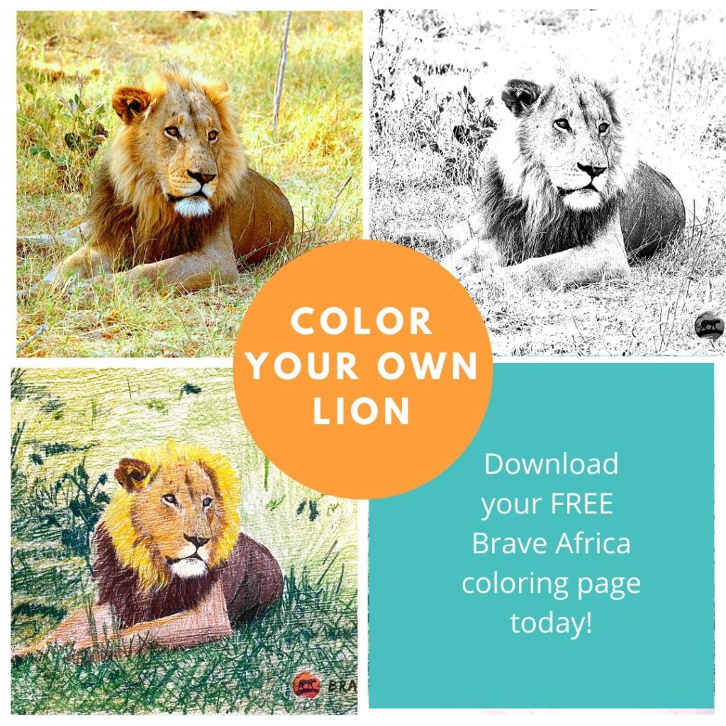 lion coloring book page example of content marketing ideas for small business