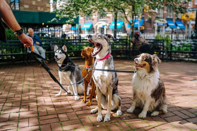 Dogs provide great emotional support and can help owners socialize more.