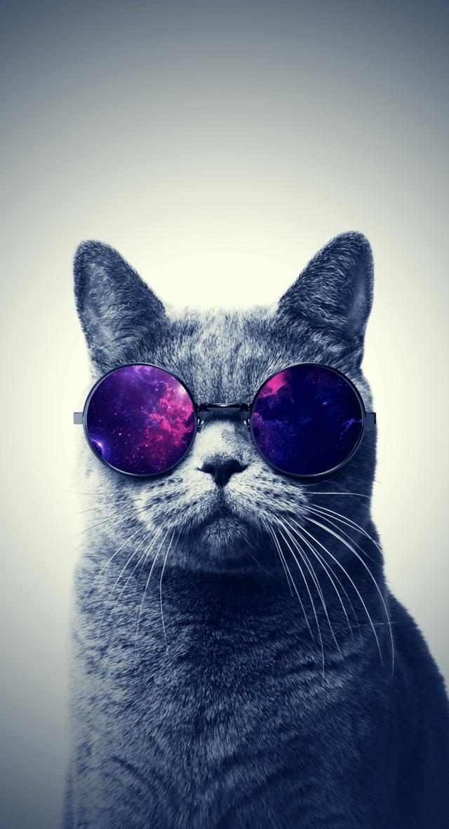 Misty-Cat