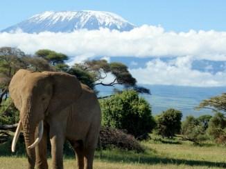 Kilimanjaro Trek An Opportunity To Revive Forgotten Bonds 5