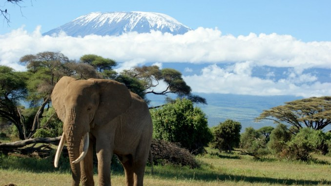 Kilimanjaro Trek An Opportunity To Revive Forgotten Bonds 5