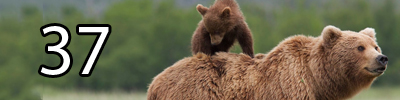 37 Bears